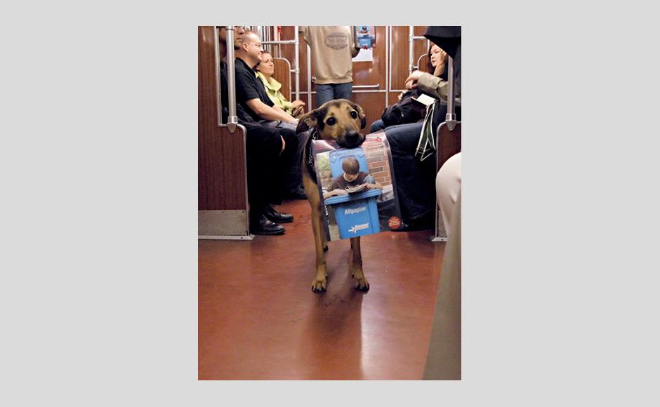 dog-magazine